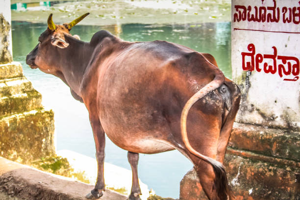 colors of india - hippo tail stock photos and pictures