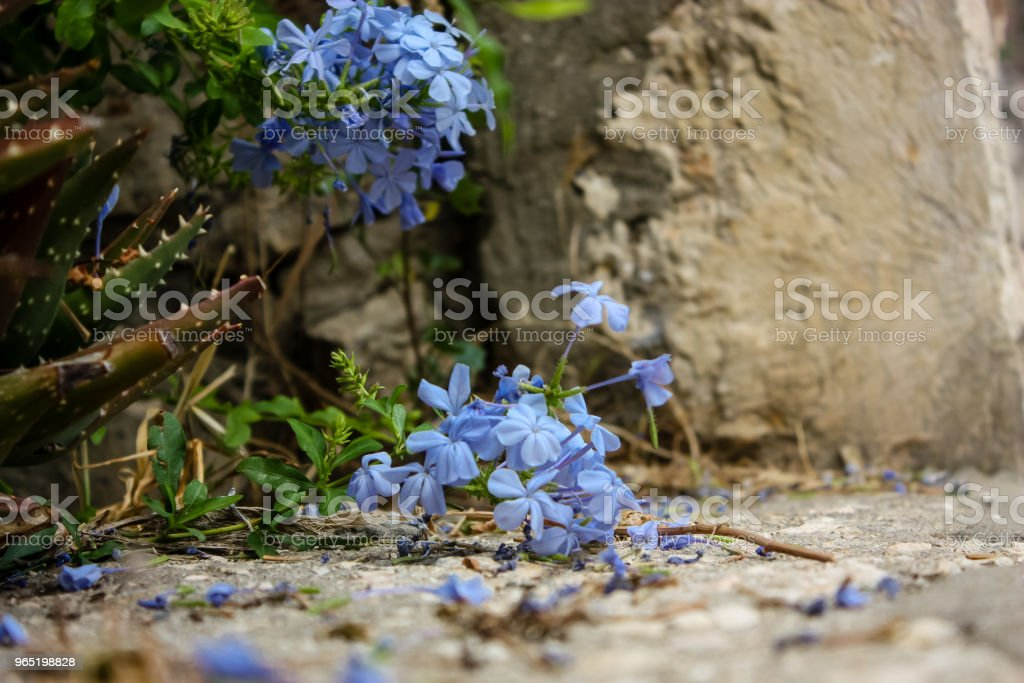 colors of Israel royalty-free stock photo