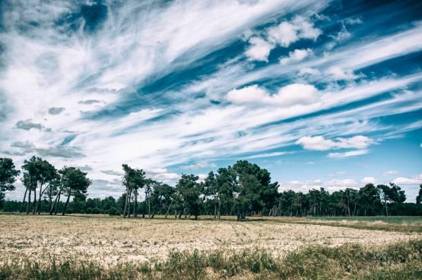 Colores de la naturaleza, en el campo arbolado. - foto de stock