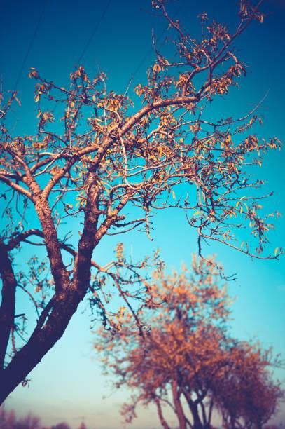 colores de la naturaleza. - monse del campo fotografías e imágenes de stock