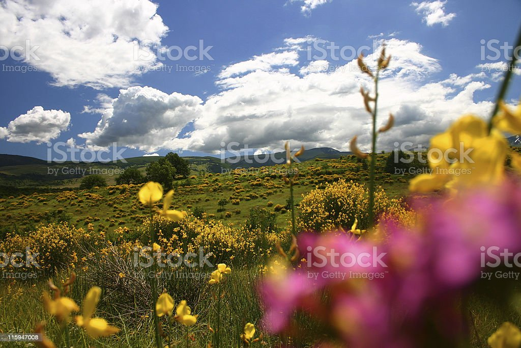 colors of spring royalty-free stock photo