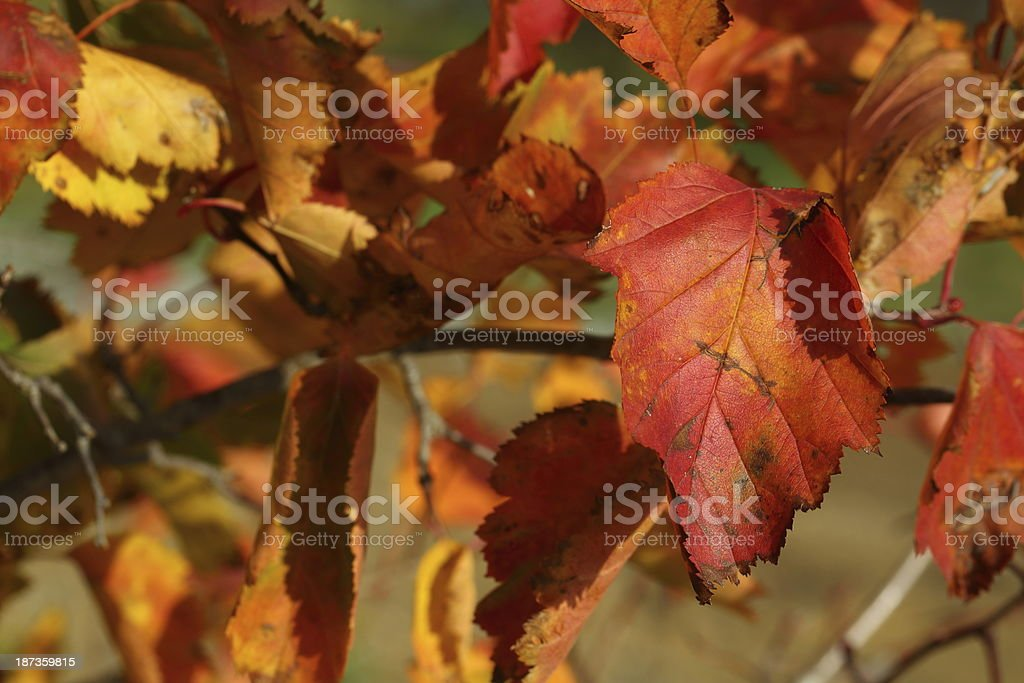 Colors of the fall royalty-free stock photo