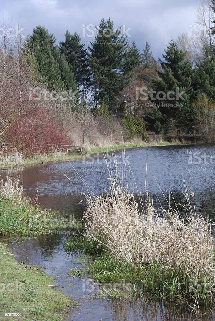 Colors Of The Lakes Edge royalty-free stock photo
