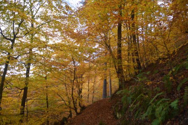 färgerna i skogen under hösten - bernkastel kues höst bildbanksfoton och bilder