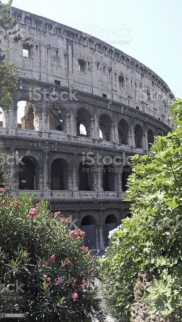 Colosseum among flowering plants of Oleander in Rome stock photo