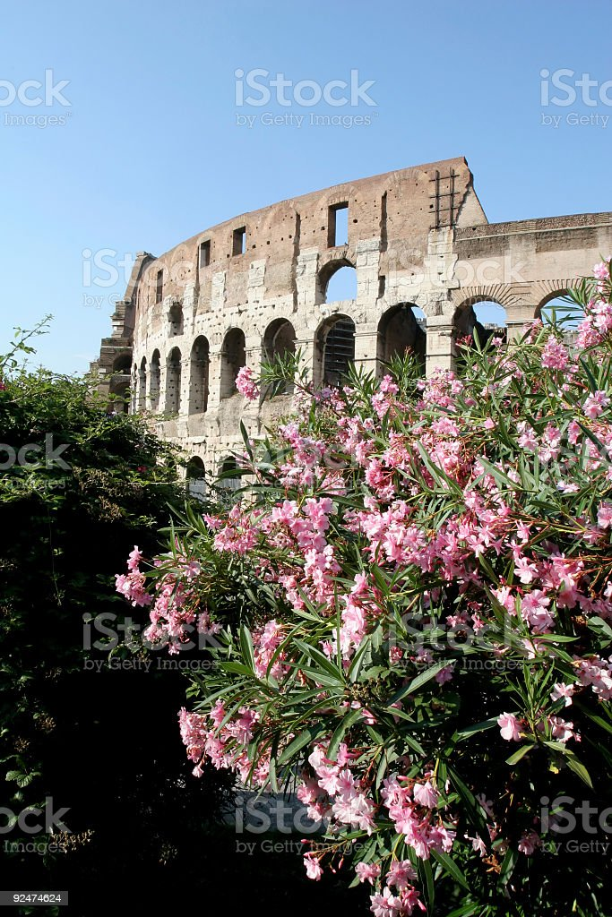 Colosseum and Flowers royalty-free stock photo