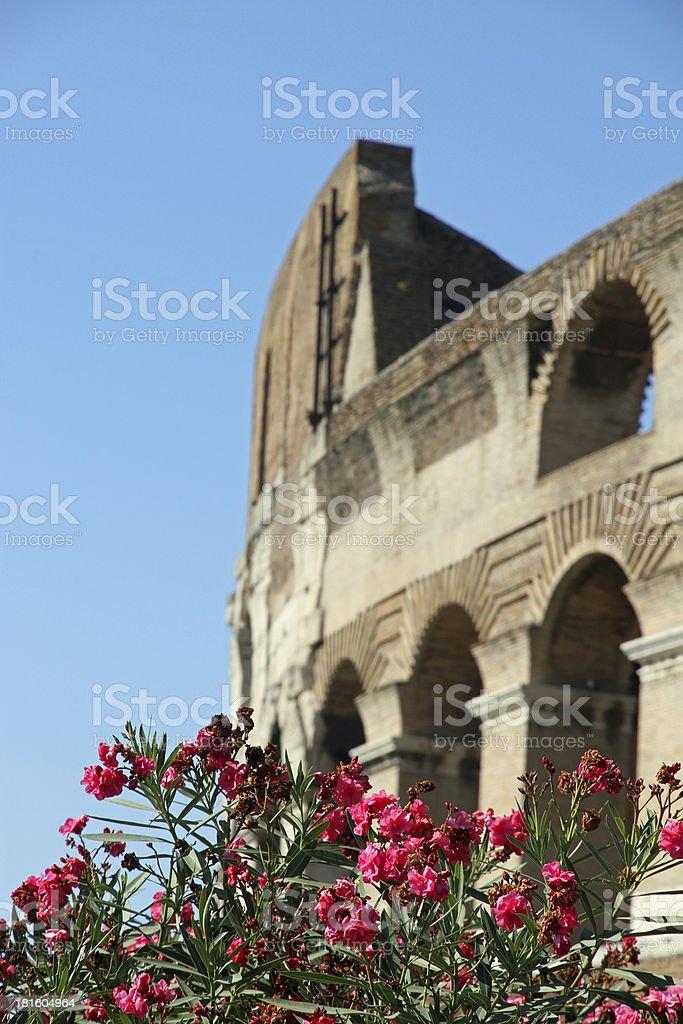 Colosseum between flowering plants of Oleander in Rome 6 stock photo