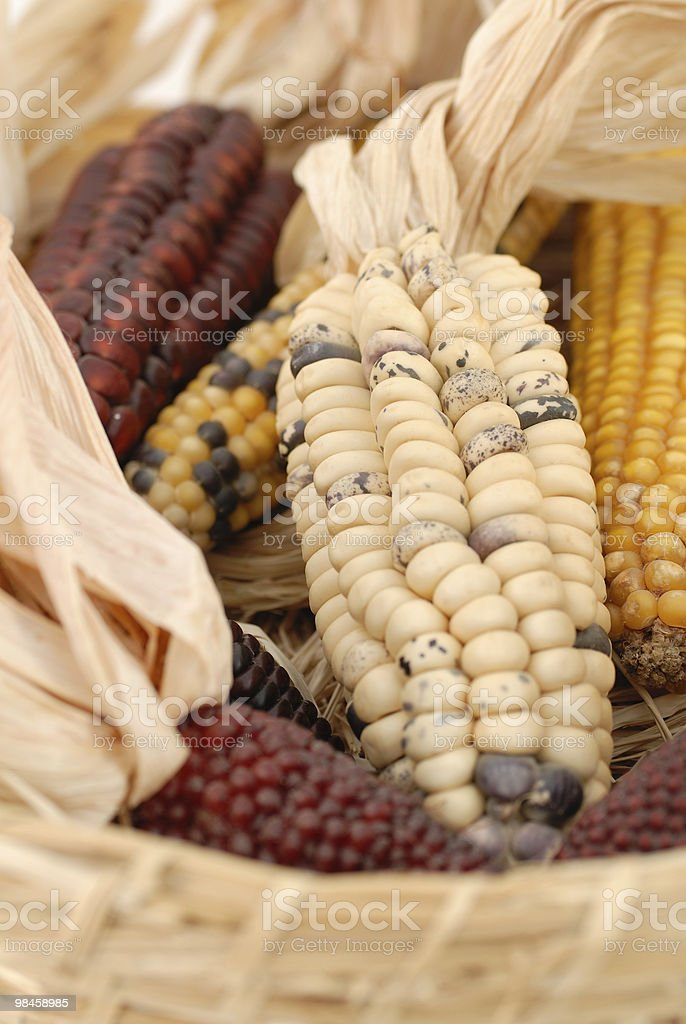 Colour indian corn royalty-free stock photo