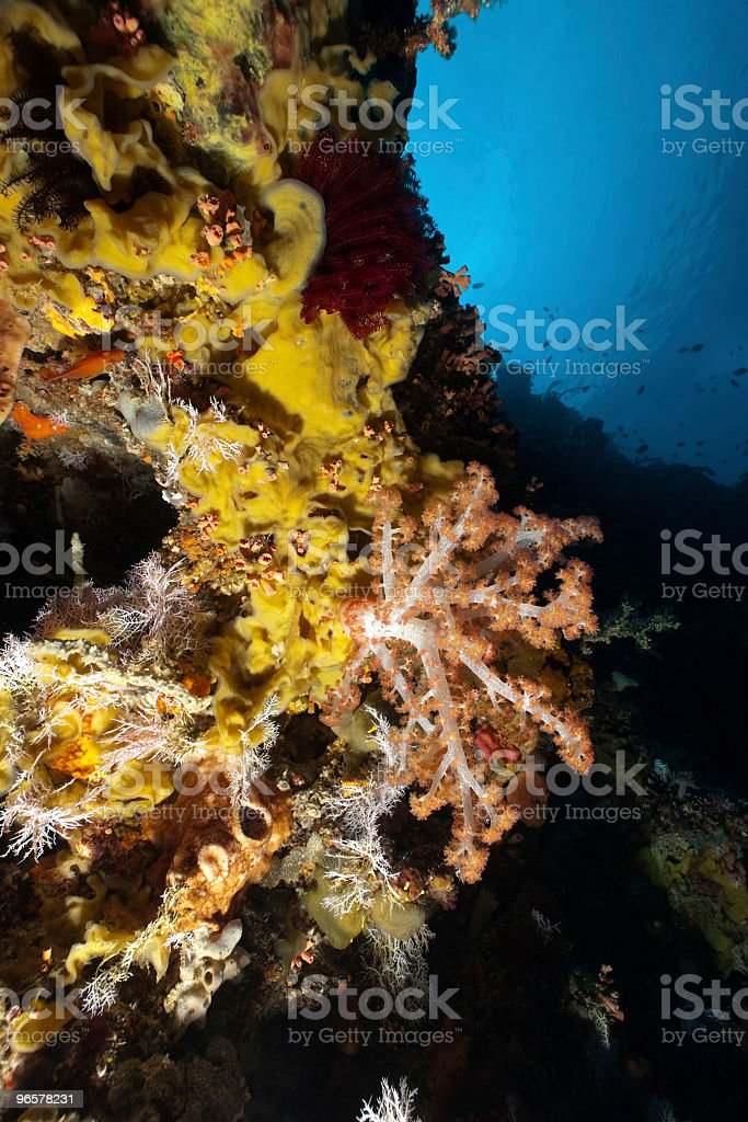 Colour Symphony at the Tropical Reef of Bunaken Island, Indonesia - Royalty-free Blauw Stockfoto