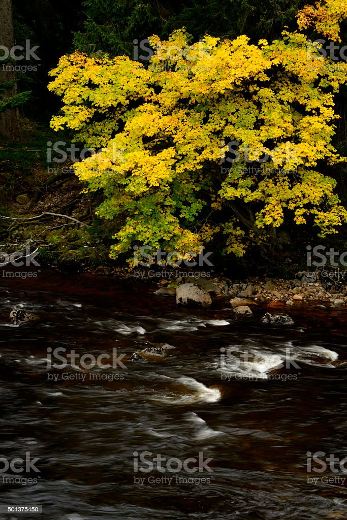 Coloured leaves on a riverbank stock photo