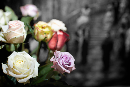 Coloured roses with black and white background