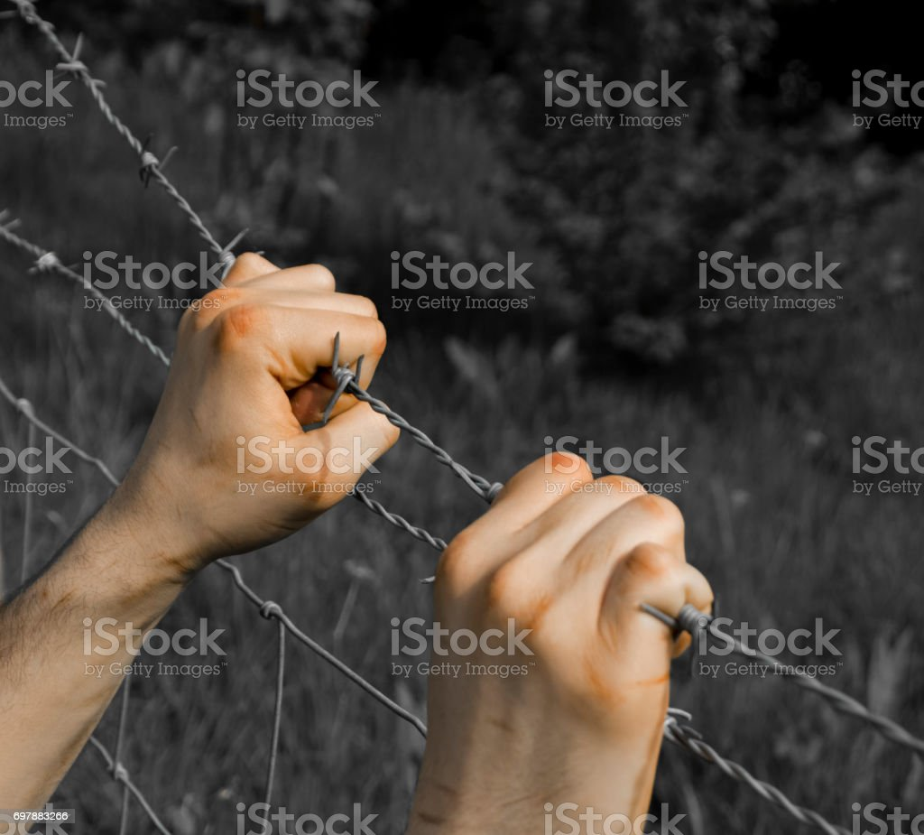 Coloured tortured hands grasping desperately barbed wire on black and white background stock photo