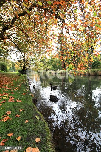 istock colourful autumn at botanic garden 1158419844