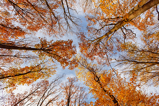 Wide angle view of autumn forest from bottom background