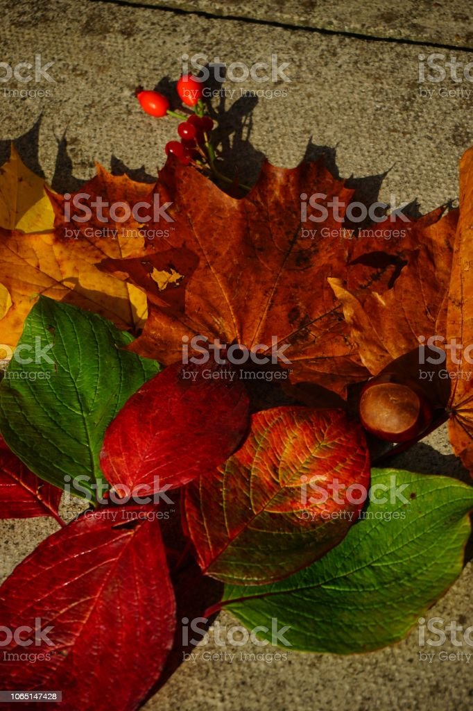 Colourful Autumn leaves arranged on the ground stock photo