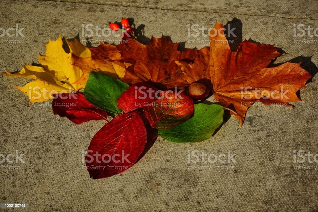 Colourful Autumn leaves arranged on the ground