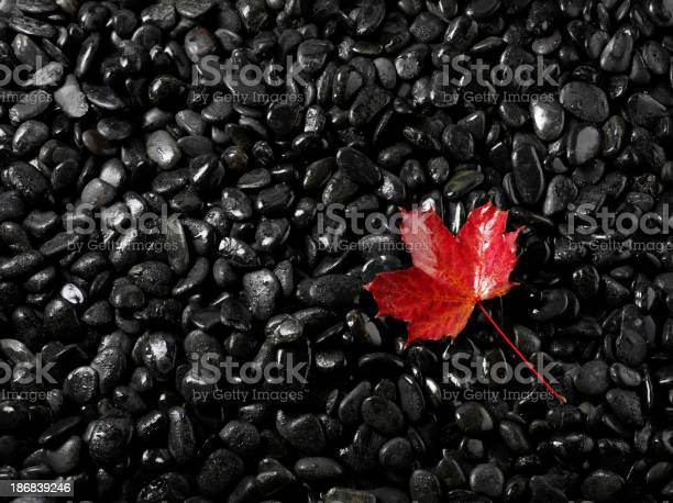 Photo of Colourful Autumn Leaves with Pebbles