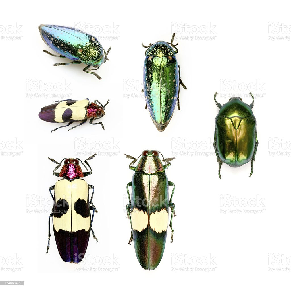 colourful beetles royalty-free stock photo