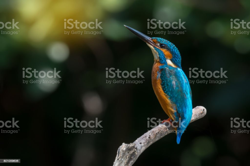 Colourful bird perching on branch. stock photo