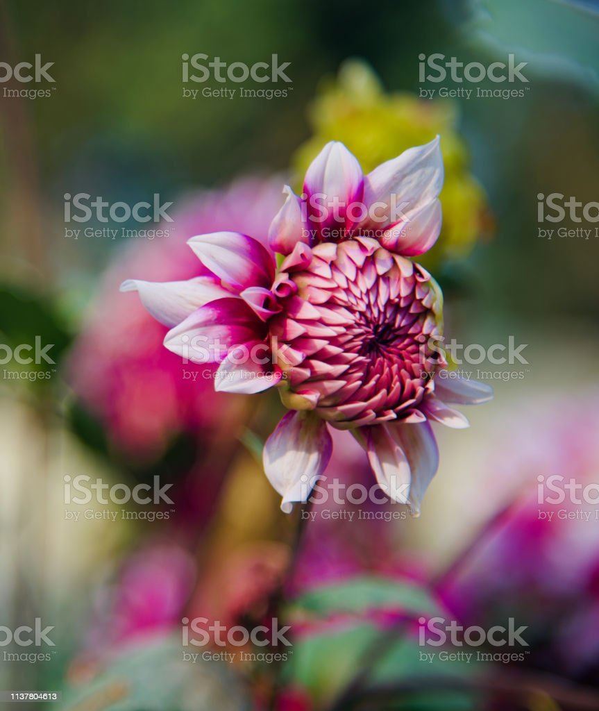 Colourful blooming flowers unique natural photo stock photo