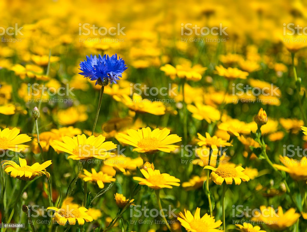 Colourful blooming wild flowers in an idyllic spring time meadow – Foto