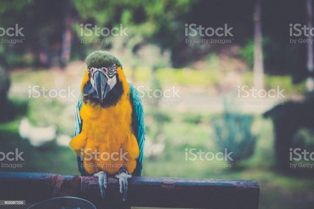 Colourful blue parrot. Wild parrot bird, blue macaw bird, ara...