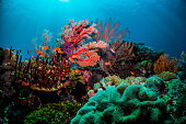 Colourful coral scene underwater with fish and divers