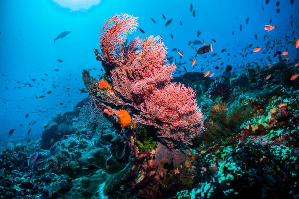 colourful coral scene underwater with fish - great barrier reef stock pictures, royalty-free photos & images