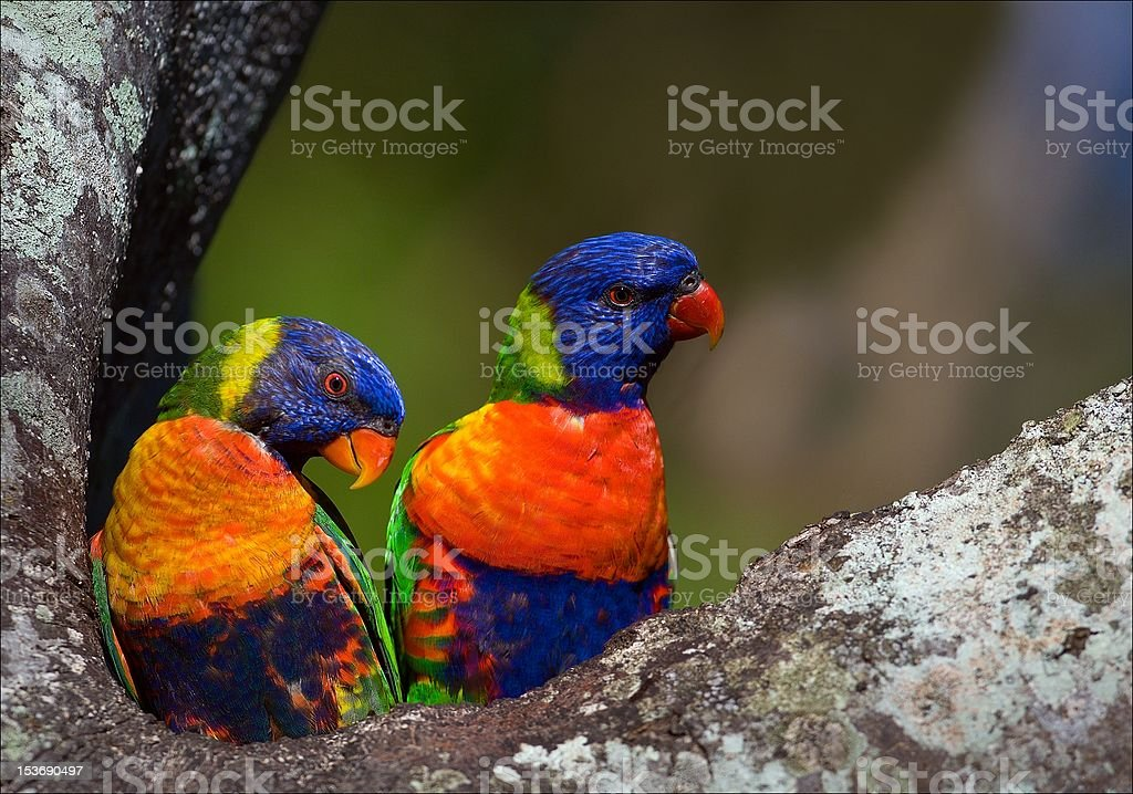 Colourful couple. royalty-free stock photo