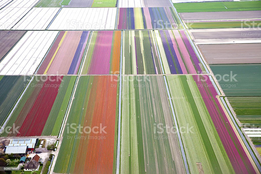 Colourful dutch flower field from above stock photo