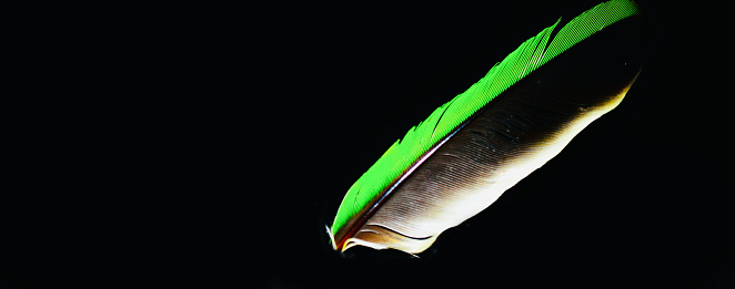 Colourful feathers of a bird isolated unique photo