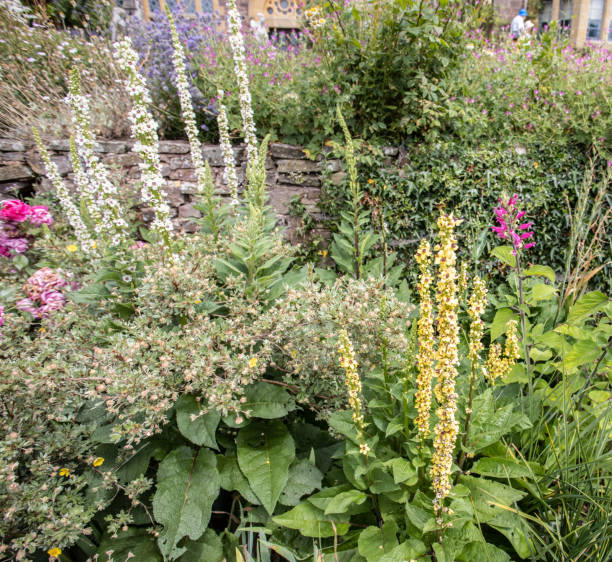 bunteblumen Blumenbeet in Knightshayes Landhaus Garten – Foto