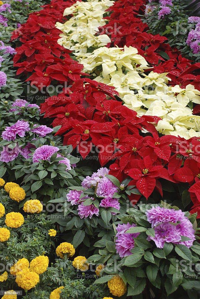 Lit de fleurs colorées photo libre de droits