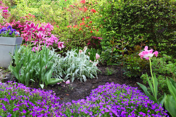 Colourful flowerbed – Foto