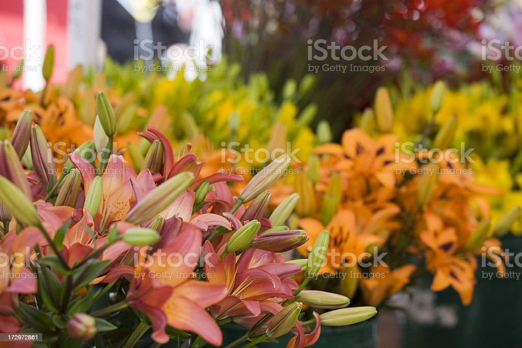 Colourful flowers that you can buy royalty-free stock photo