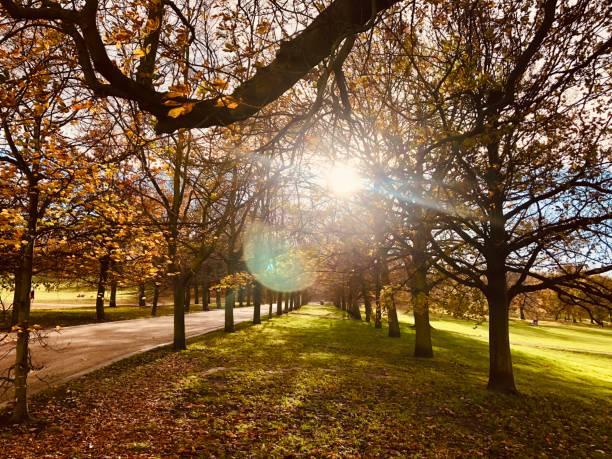 Colourful lens flare created from sun shining through autumn trees creating bright lens flare stock photo
