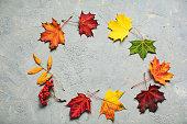 Colourful maple fall leaves