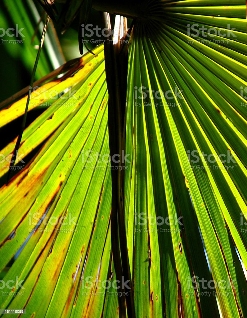 colourful palm leaf stock photo