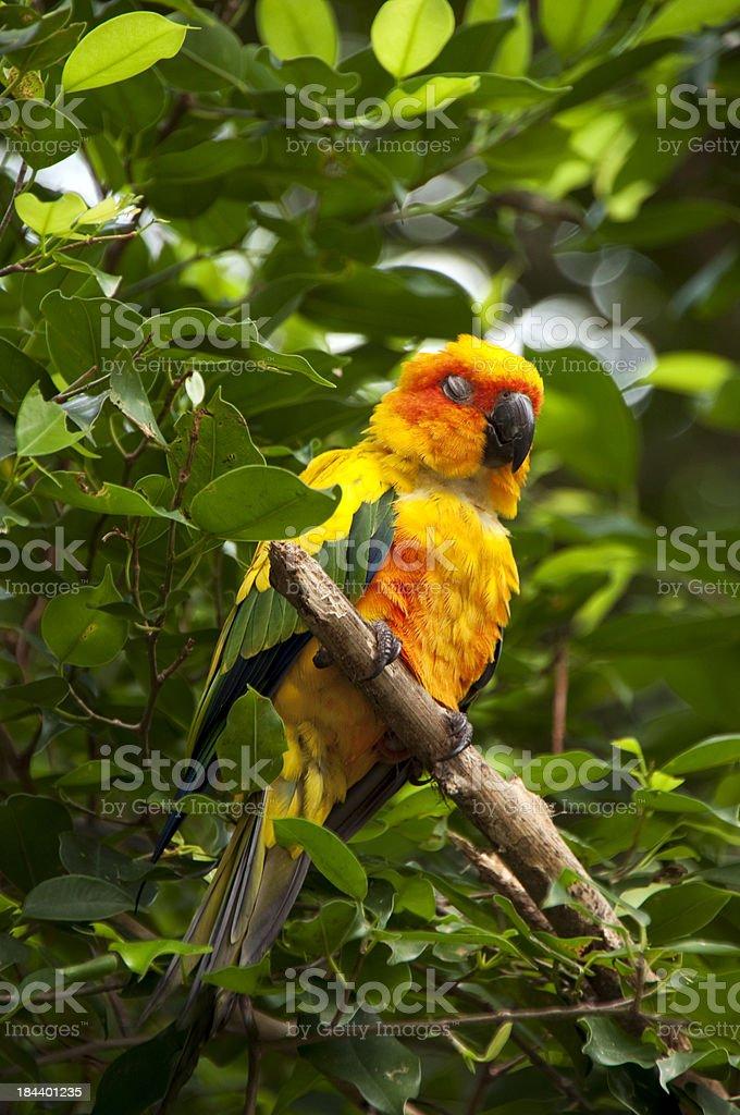 Colourful Parrot Sleeping on Tree stock photo