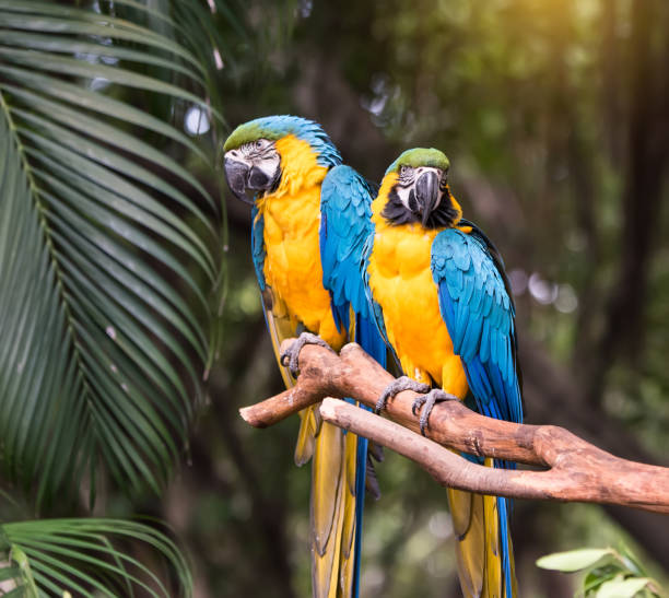 Colourful parrots bird sitting on the perch. stock photo