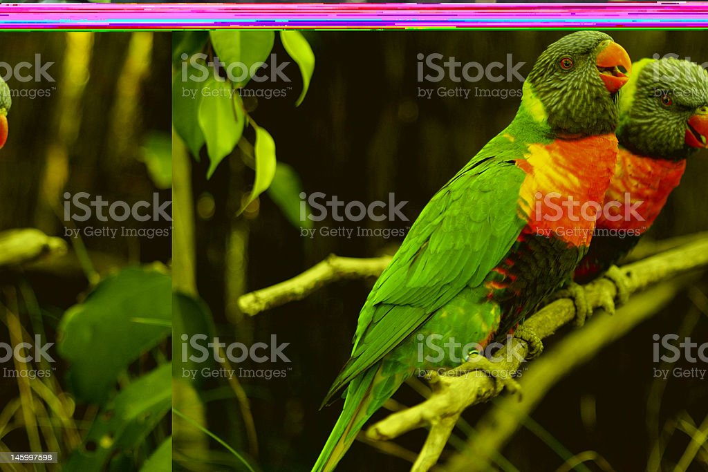 Colourful Parrots stock photo