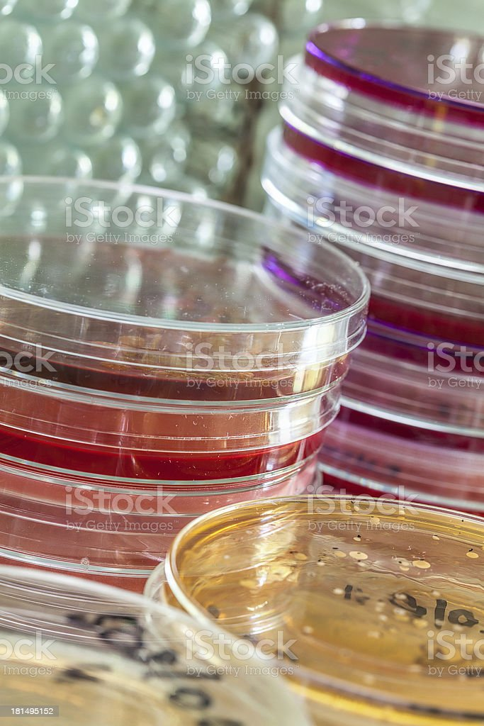Colourful petri dishes royalty-free stock photo