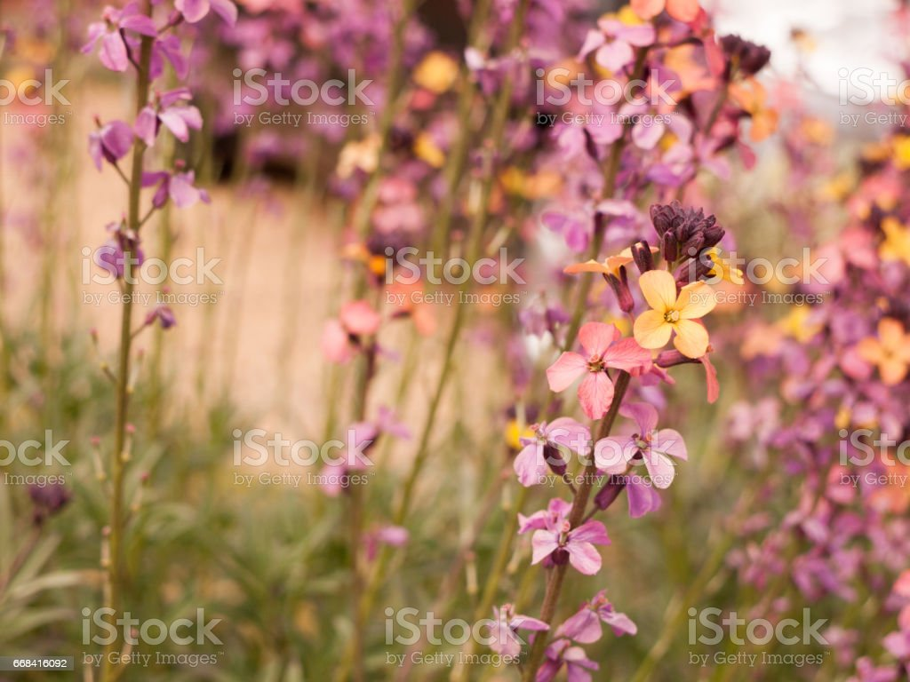 Colourful Pretty Flowers Looking Very Ornate And Funky Stock Photo