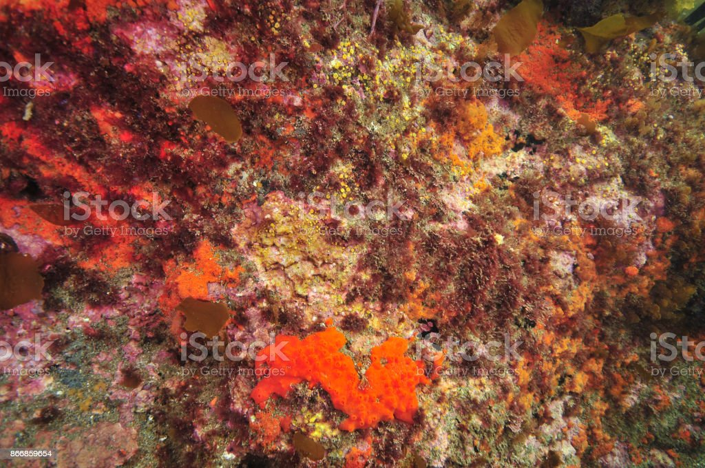 Colourful reef wall stock photo