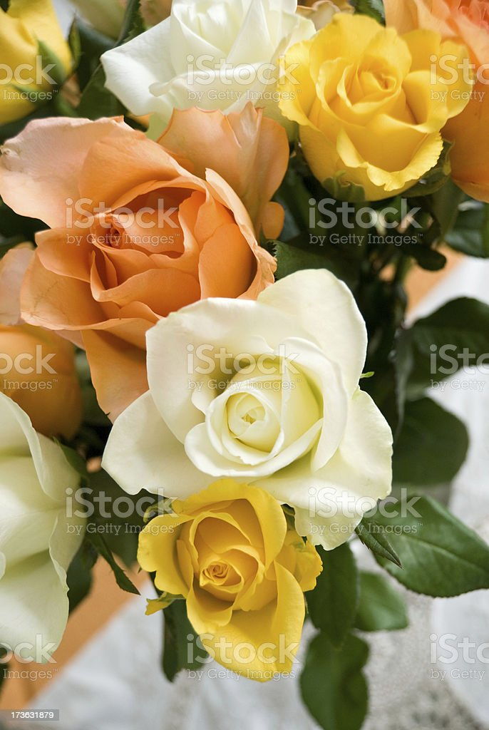 colourful roses royalty-free stock photo