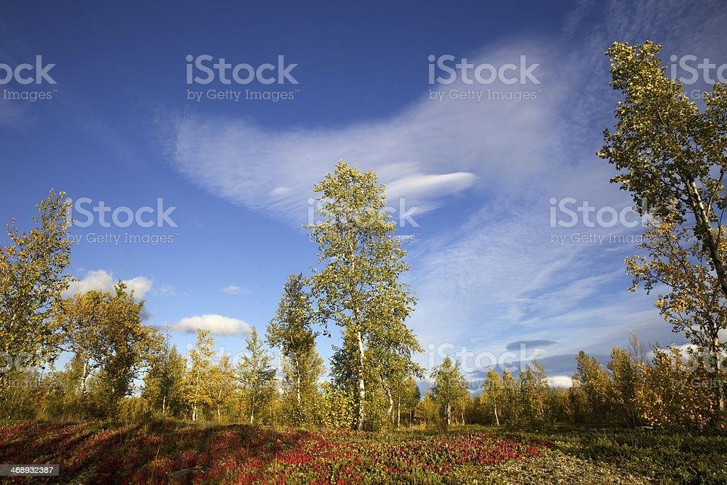 Colourful scenery at Nikkaluokta stock photo