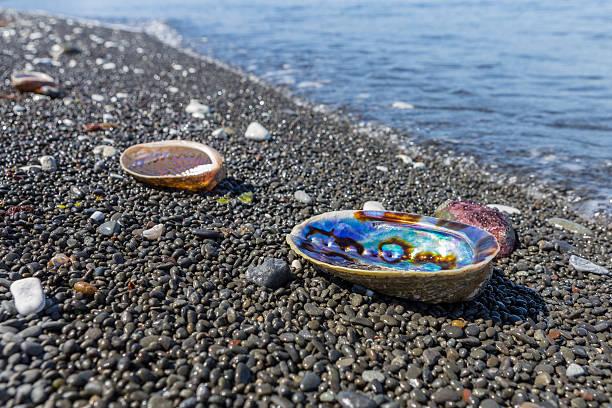 Colourful seashells on a gravel beach stock photo