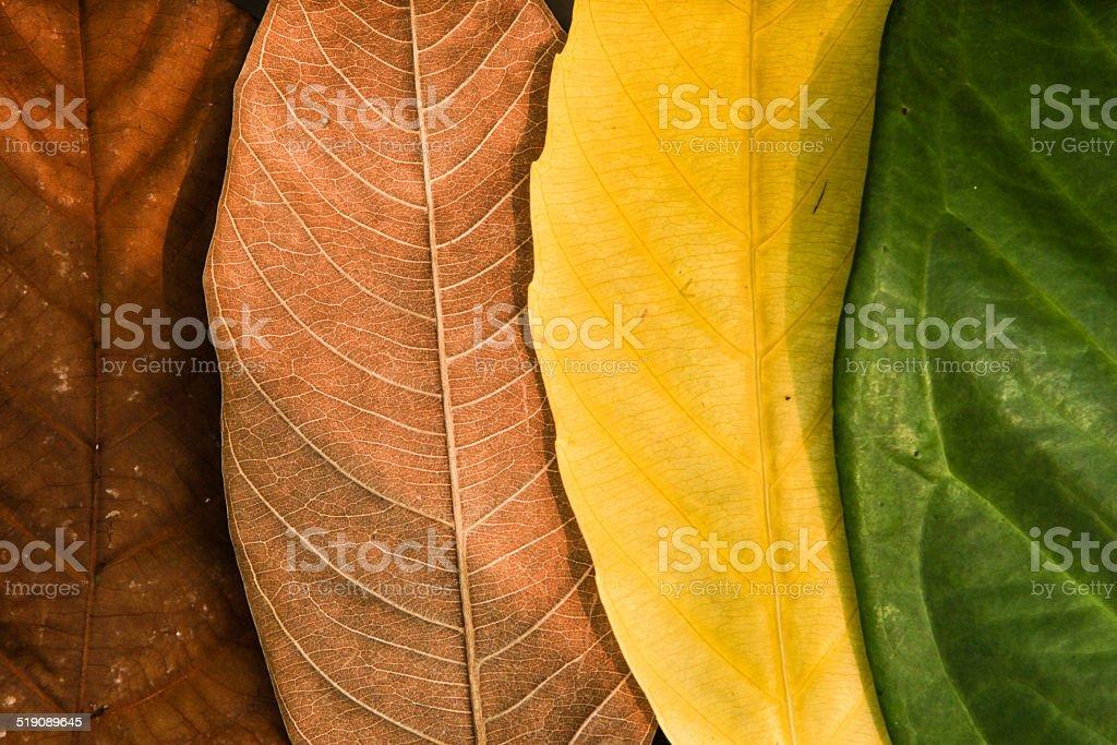 colourful seasonal leaf stock photo