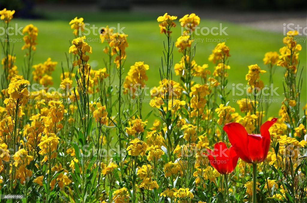 Colourful Spring Flowers In An English Garden Stock Photo More