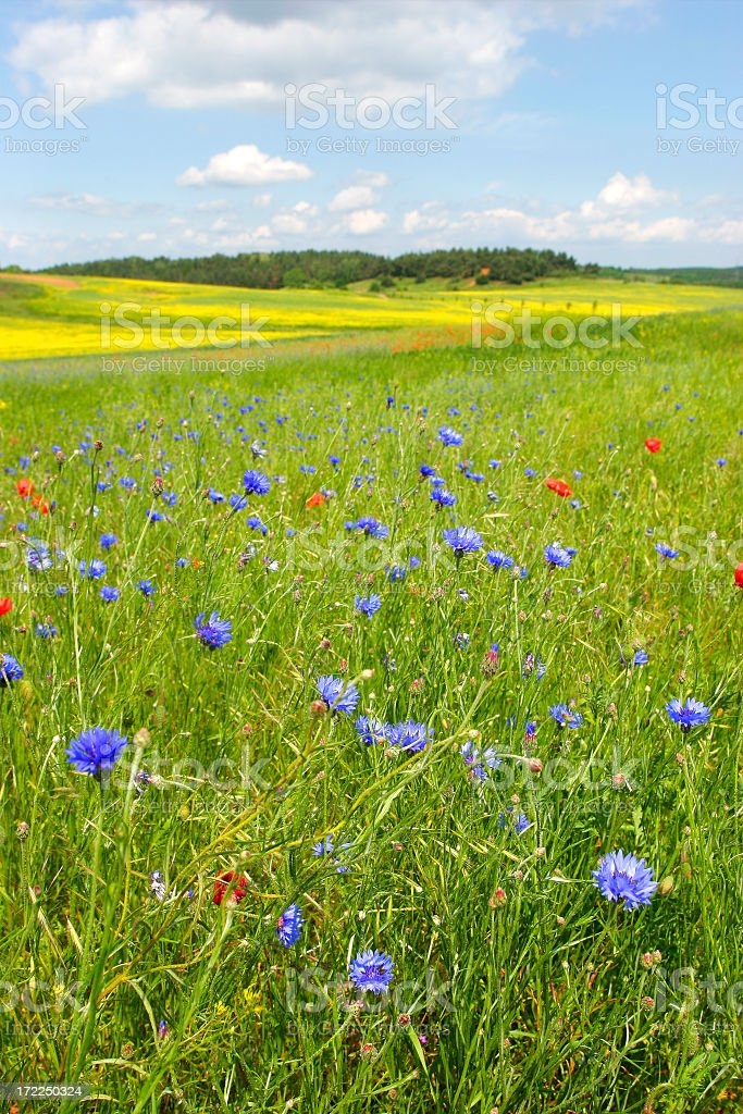 Colourful Summer Meadow royalty-free stock photo